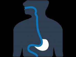 Gastroen  –  terología